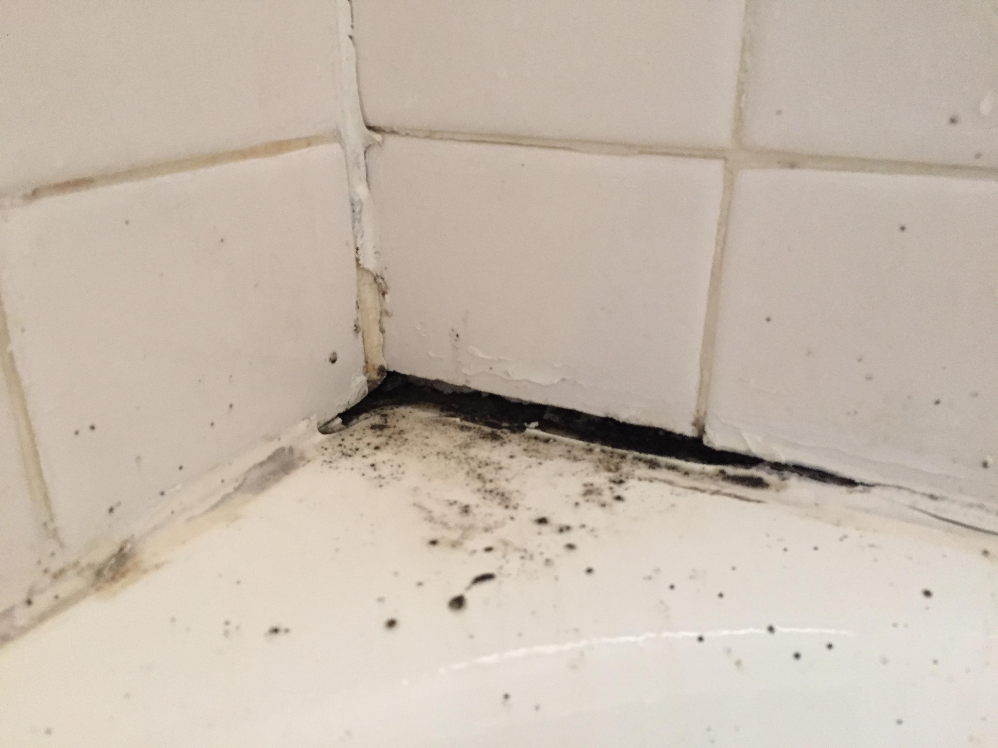 Black Mold In Bathroom Apartment new apartment: bathroom – arts & fetters